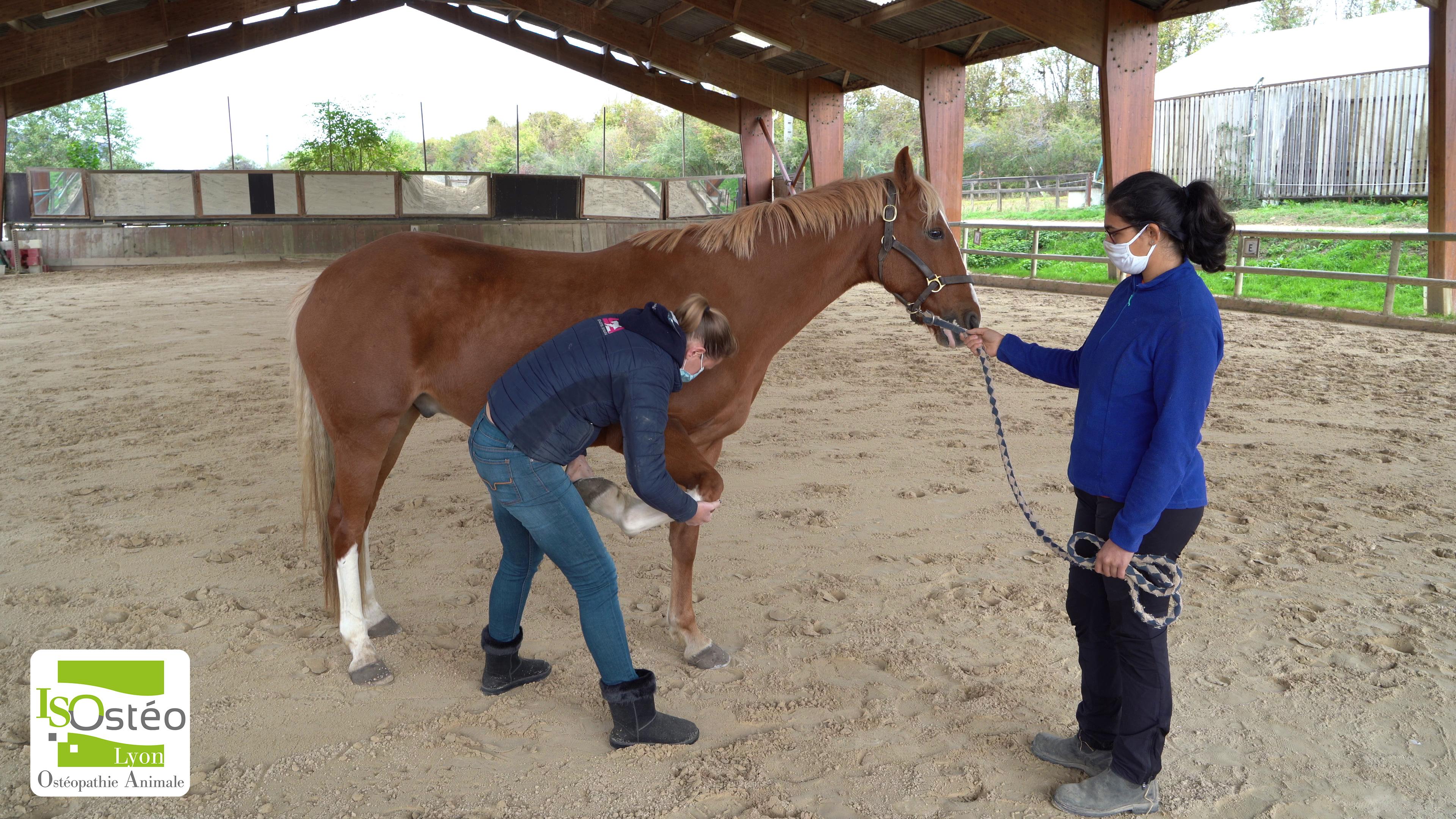 pratique cheval ostéopathie animale